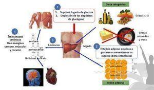 Piramide Nutricional en cetosis